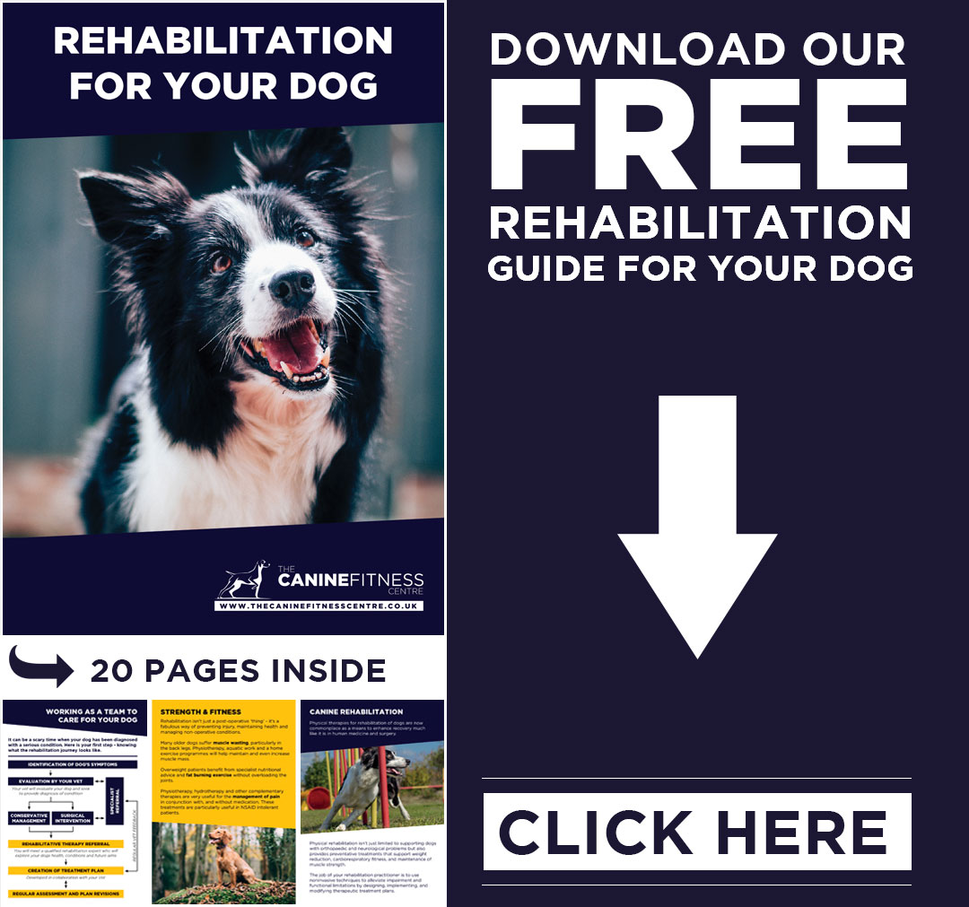 Download our rehabilitation guide